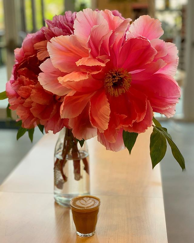 Giant flower towering over a tiny latte makes for a dreamy moment captured in the afternoon 😌 #everbeancafe #community #coffeebreak