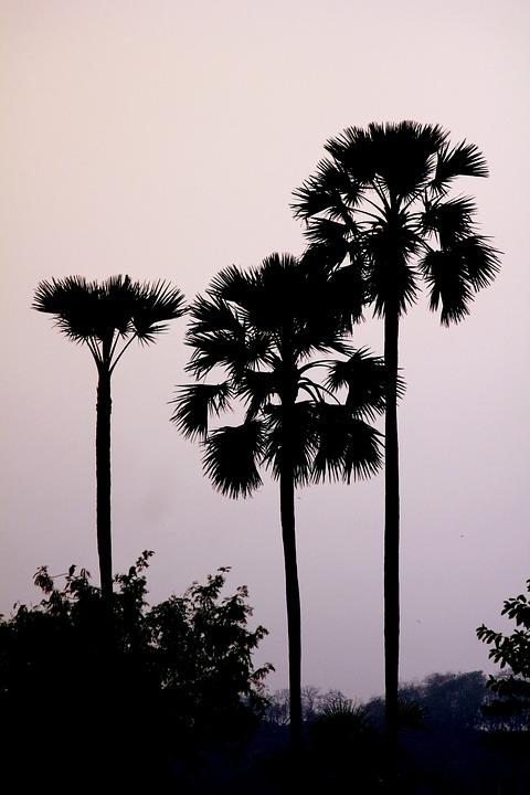 palm-166795_960_720.jpg