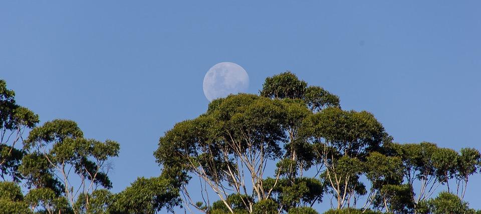 moon-1164144_960_720.jpg