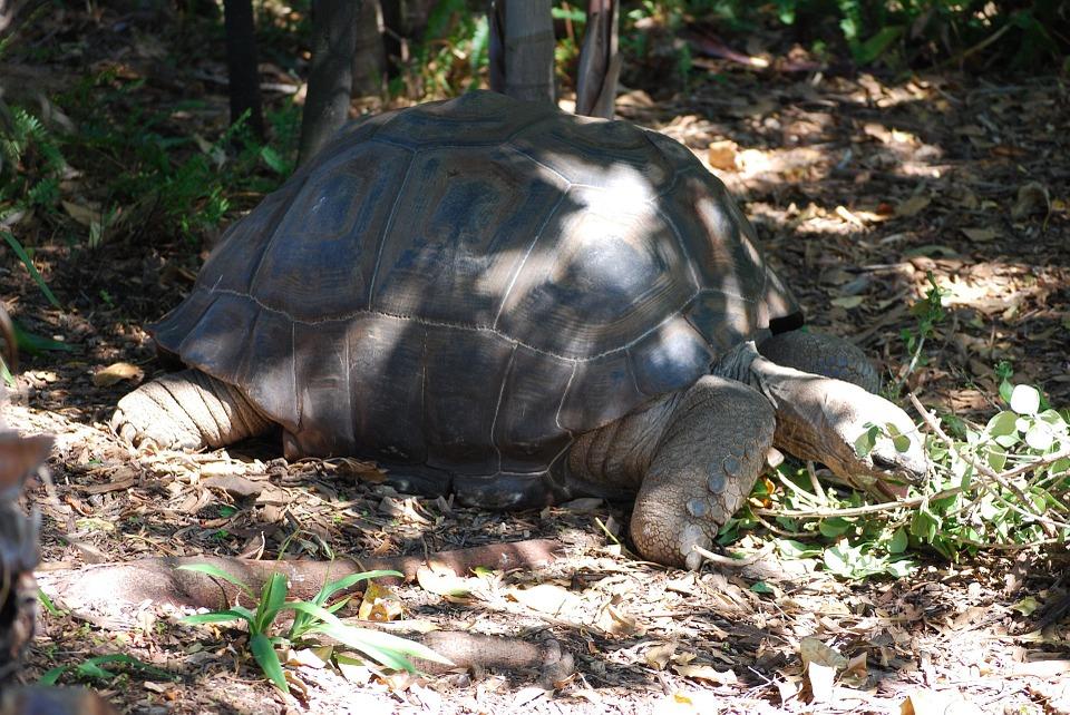 tortoise-163984_960_720.jpg