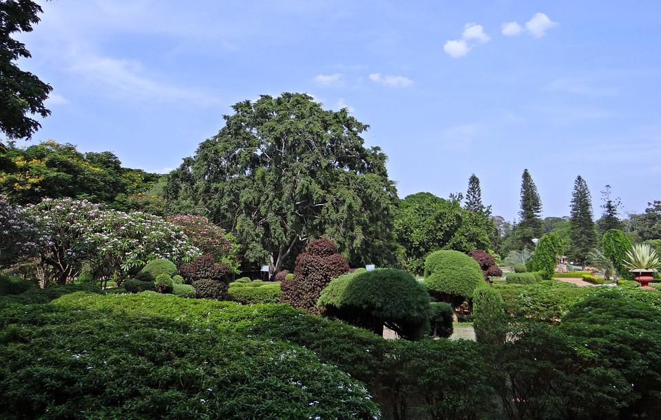 botanical-garden-332535_960_720.jpg