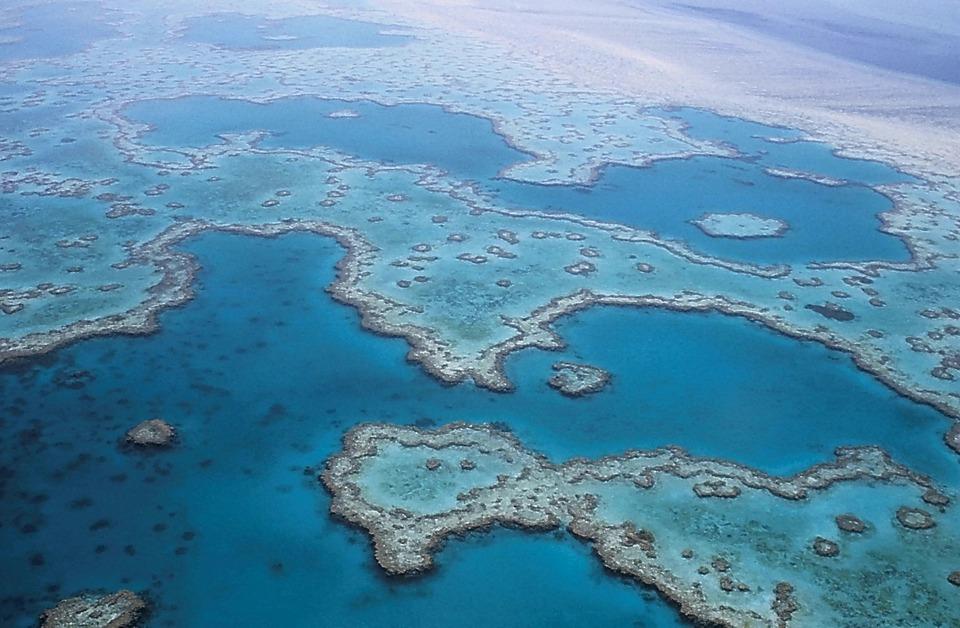 great-barrier-reef-527987_960_720.jpg