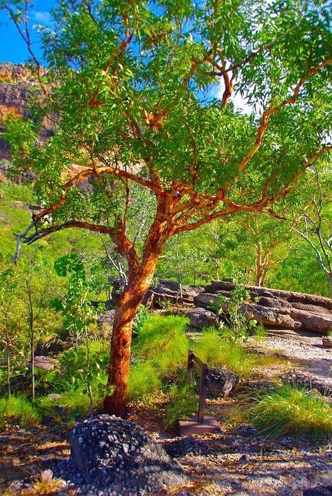 tree-389039_960_720.jpg