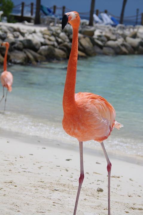 flamingo-641085_960_720.jpg