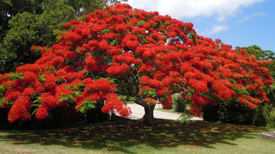 flowering-tree-170524_960_720.jpg