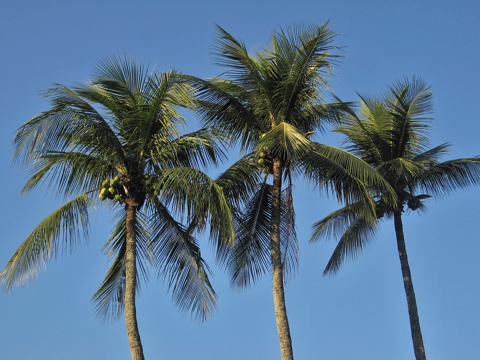 royal-palms-1225858_960_720.jpg