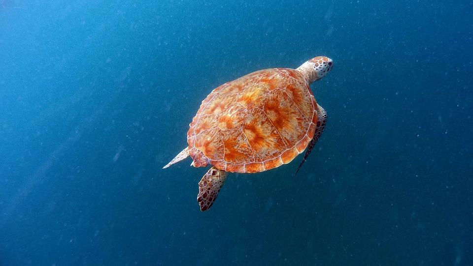 turtle-1446727_960_720.jpg