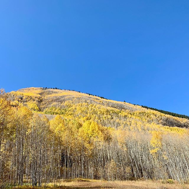 Basking in the beautiful Aspens today