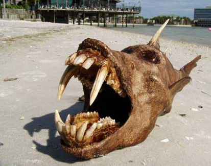 Devil Fish is an excellent Fake. Florida taxidermist famous for his aquatic adaptations causes quite a stir on the internet with his newest creature, the devil fish.