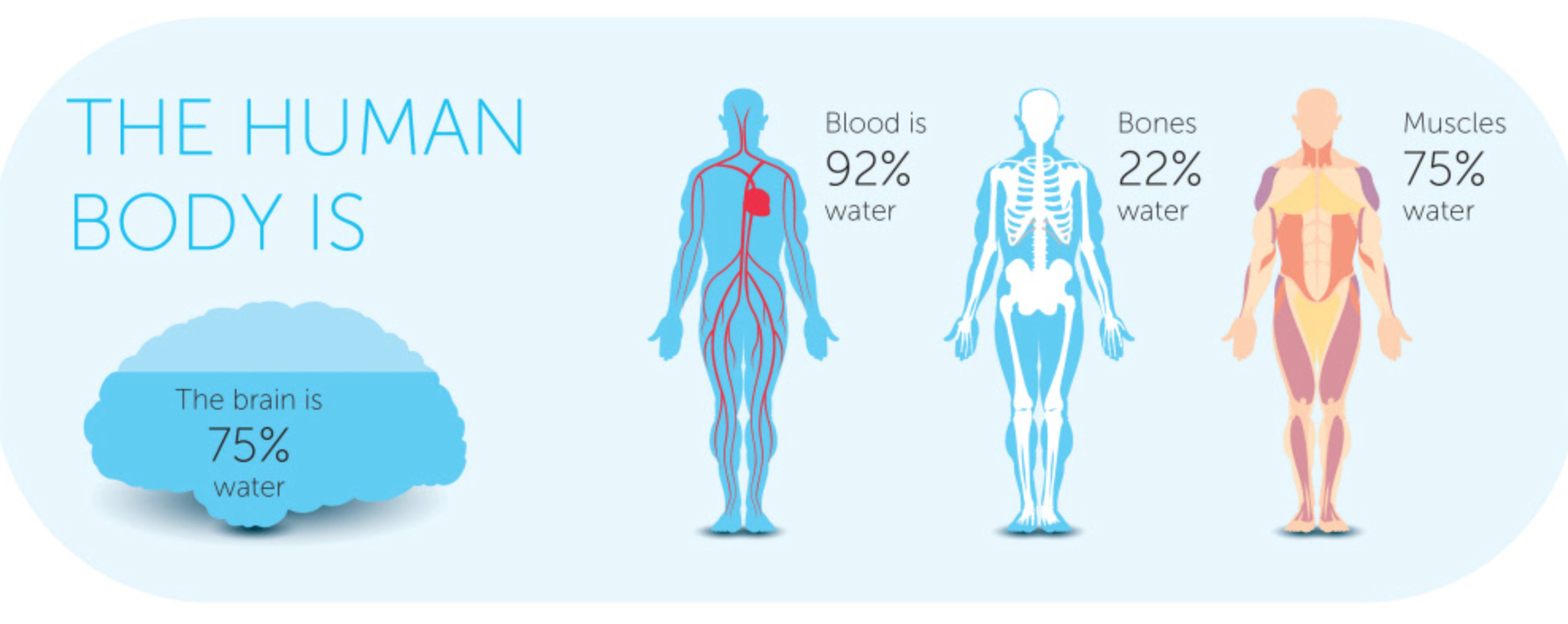 water-is-life-importance-of-hydration.png