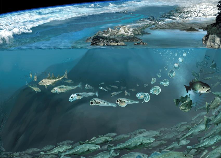 Marine ecology image.png
