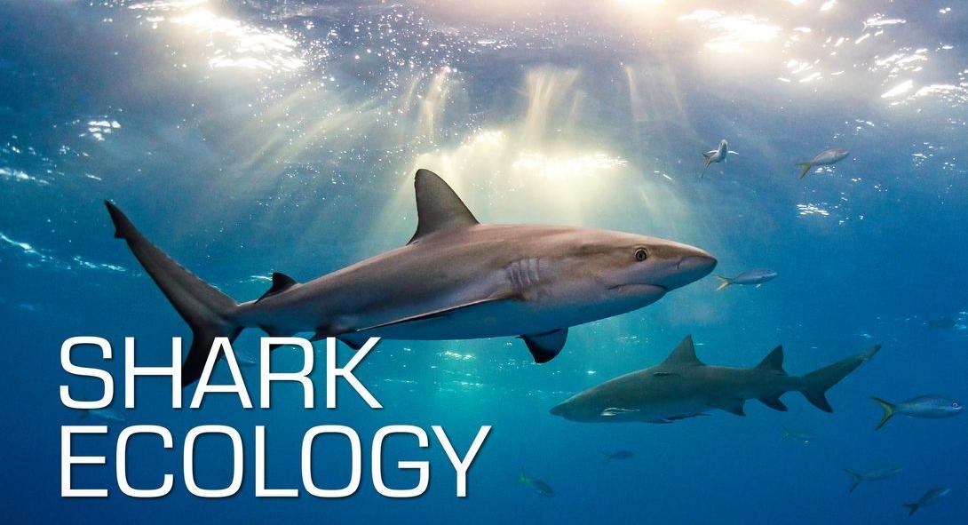 Shark Ecology.jpg