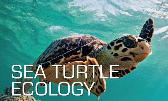 Turtle Ecology.jpg