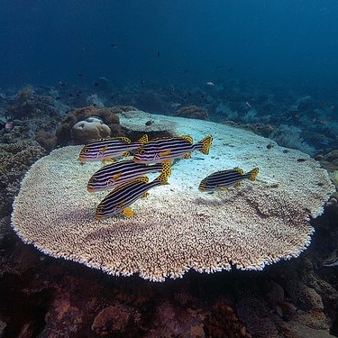 Table-Coral.jpg