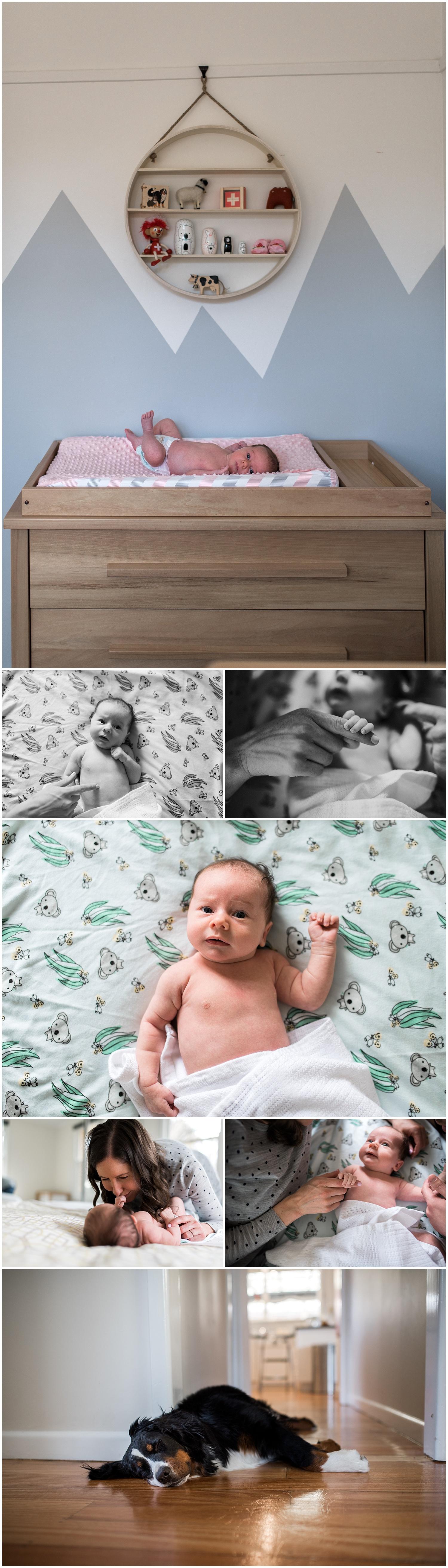 sandringham newborn photographer