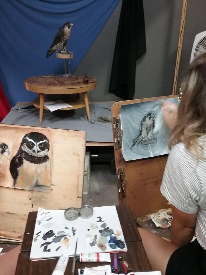falcon posing .jpg