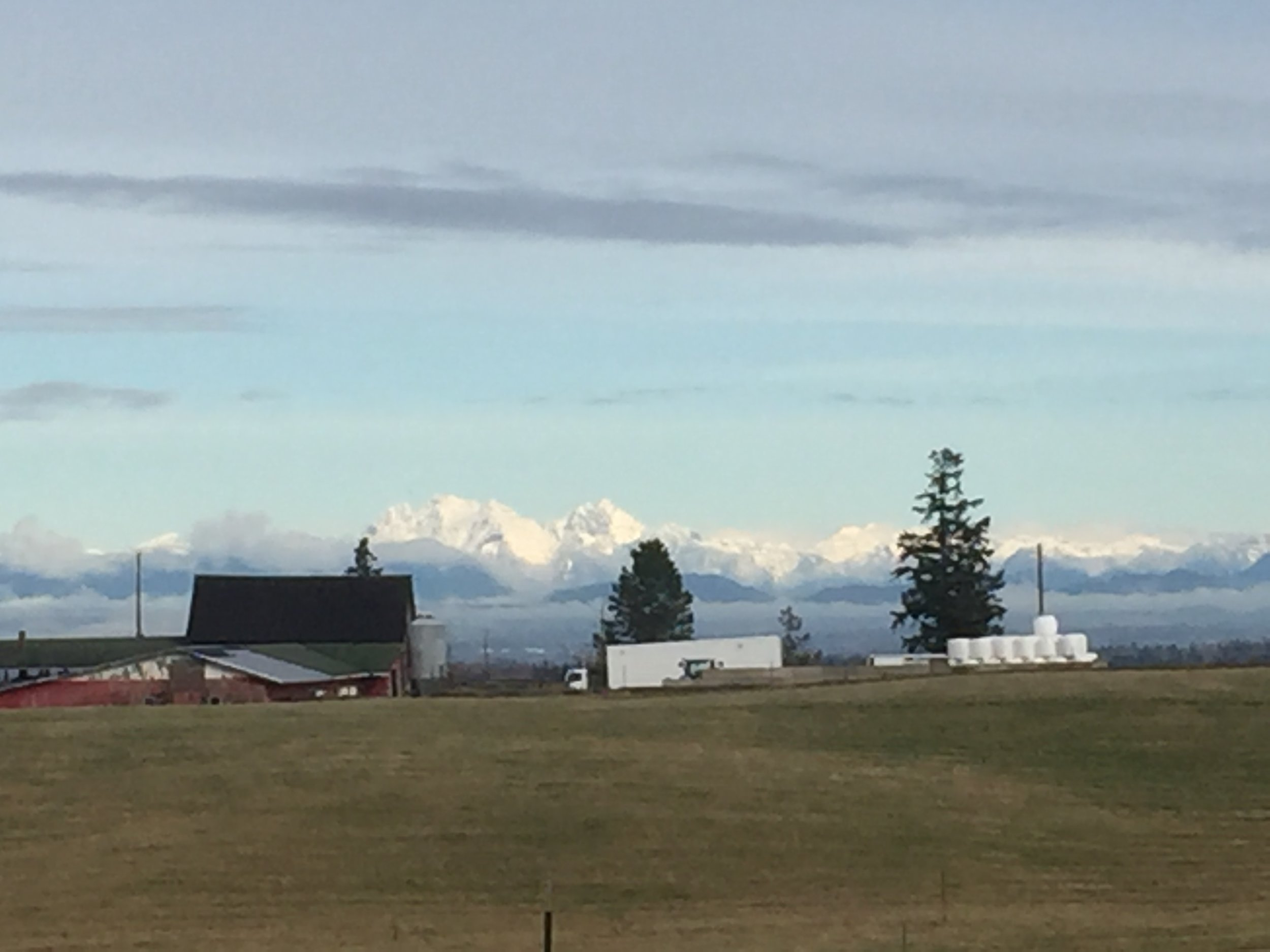 The pigs have a great view of the Canadian Cascade range, and the new mobile processing unit of the North Cascades Meat Producers Cooperative. This unit lives at Circle F these days, and the cooperative is getting ready for the launch of their MPU this fall.