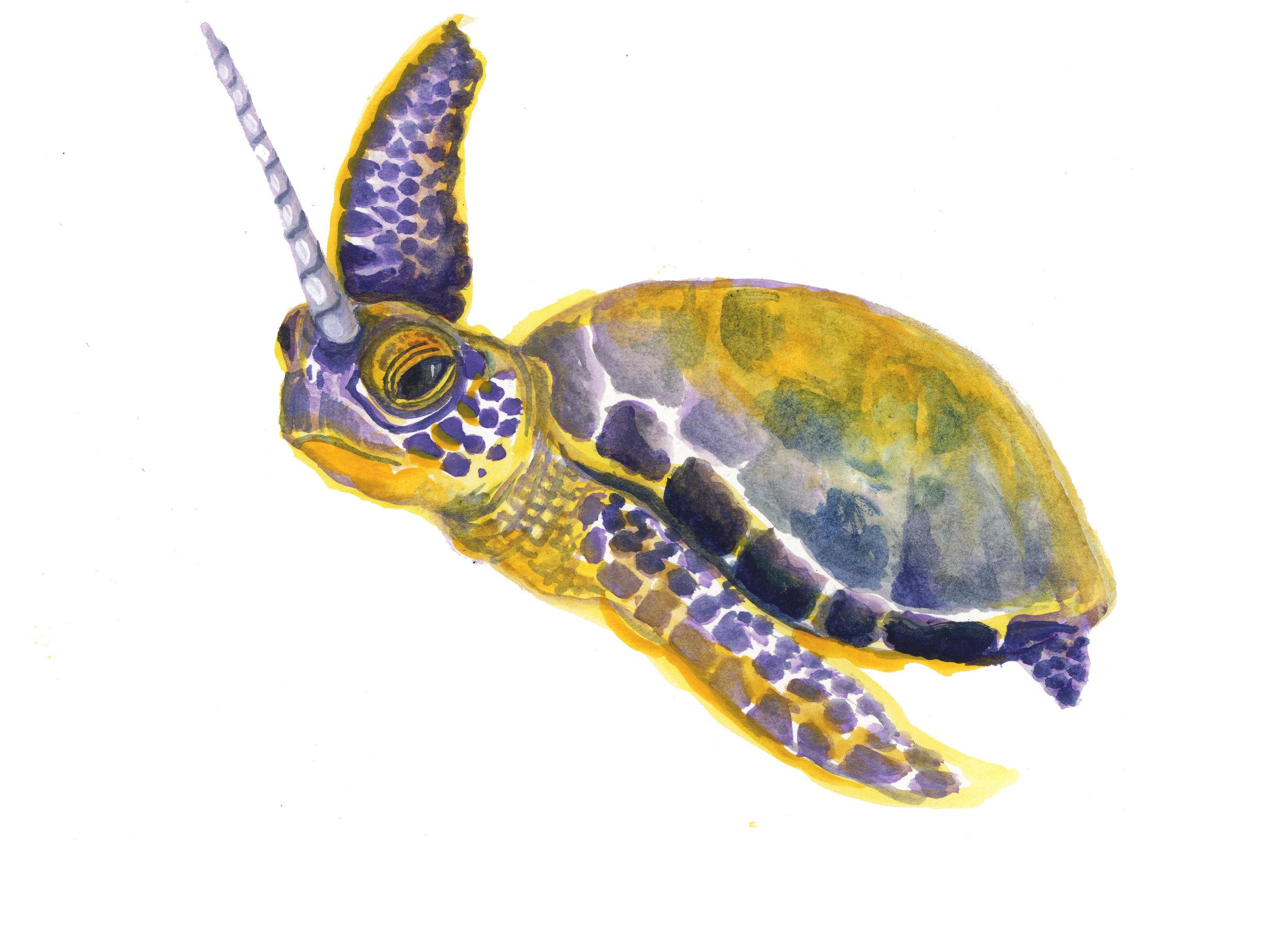 turtlecorn.jpg