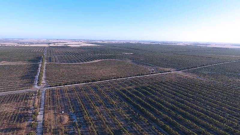 ariel view field.jpg