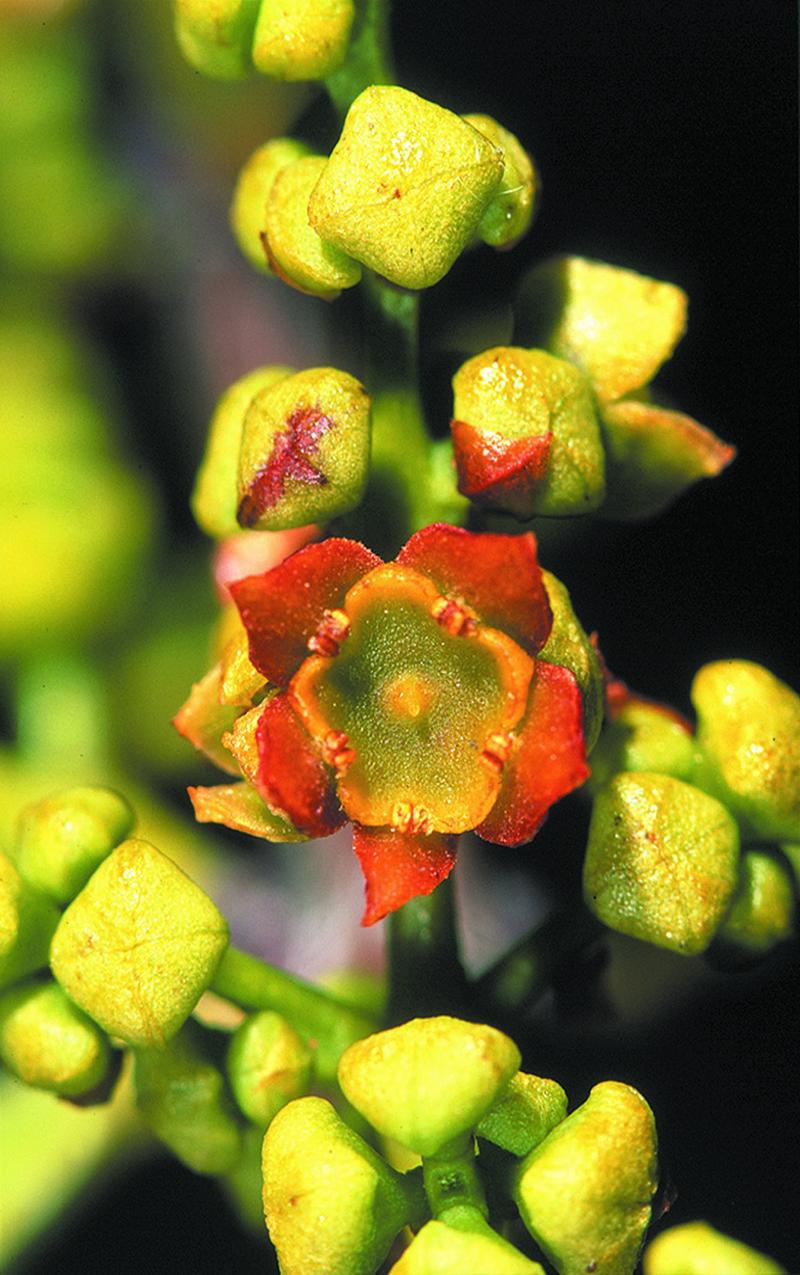 close up flower.jpg