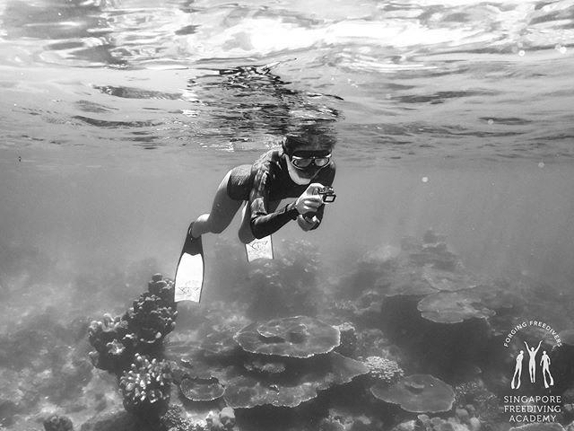要和我一起拍大自然吗? • #apneasg #morning #divetrip #freedive #freediving #sgfreedivers #freedivesg #freediveislife #sfa #singaporefreedivingacademy #padi #padifreediving #SSI #IAMSSI #saltylife #getaway #holiday #pulaudayang #dayangisland #exploredayang #depth #sun #sand #sea #bigblue #101reasonstofreedive #sunkissed #sun #sunny #sunsandsea #saltylife #islandlife