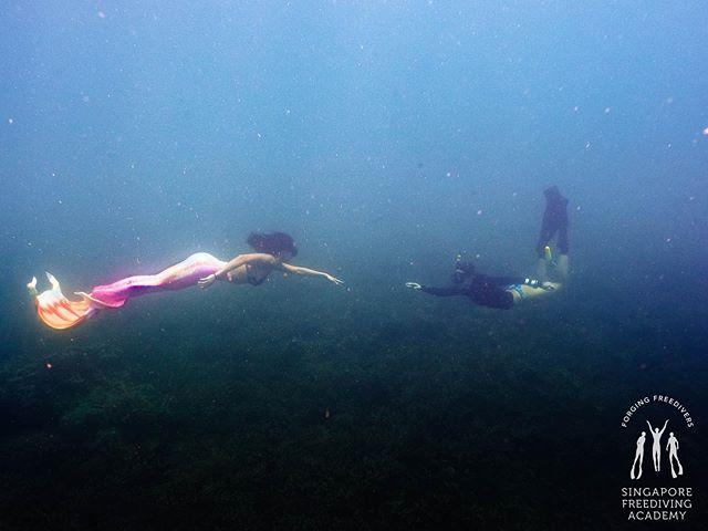 🎶🎵𝘜𝘯𝘥𝘦𝘳 𝘵𝘩𝘦 𝘴𝘦𝘢~ • #apneasg #morning #divetrip #freedive #freediving #sgfreedivers #freedivesg #freediveislife #sfa #singaporefreedivingacademy #SSI #IAMSSI #saltylife #getaway #holiday #pulaudayang #dayangisland #exploredayang #depth #underthesea #bigblue #101reasonstofreedive #sunkissed #sun #sunny #sunsandsea #saltylife #islandlife  #girlswhofreedive #mermaiding #mermaid
