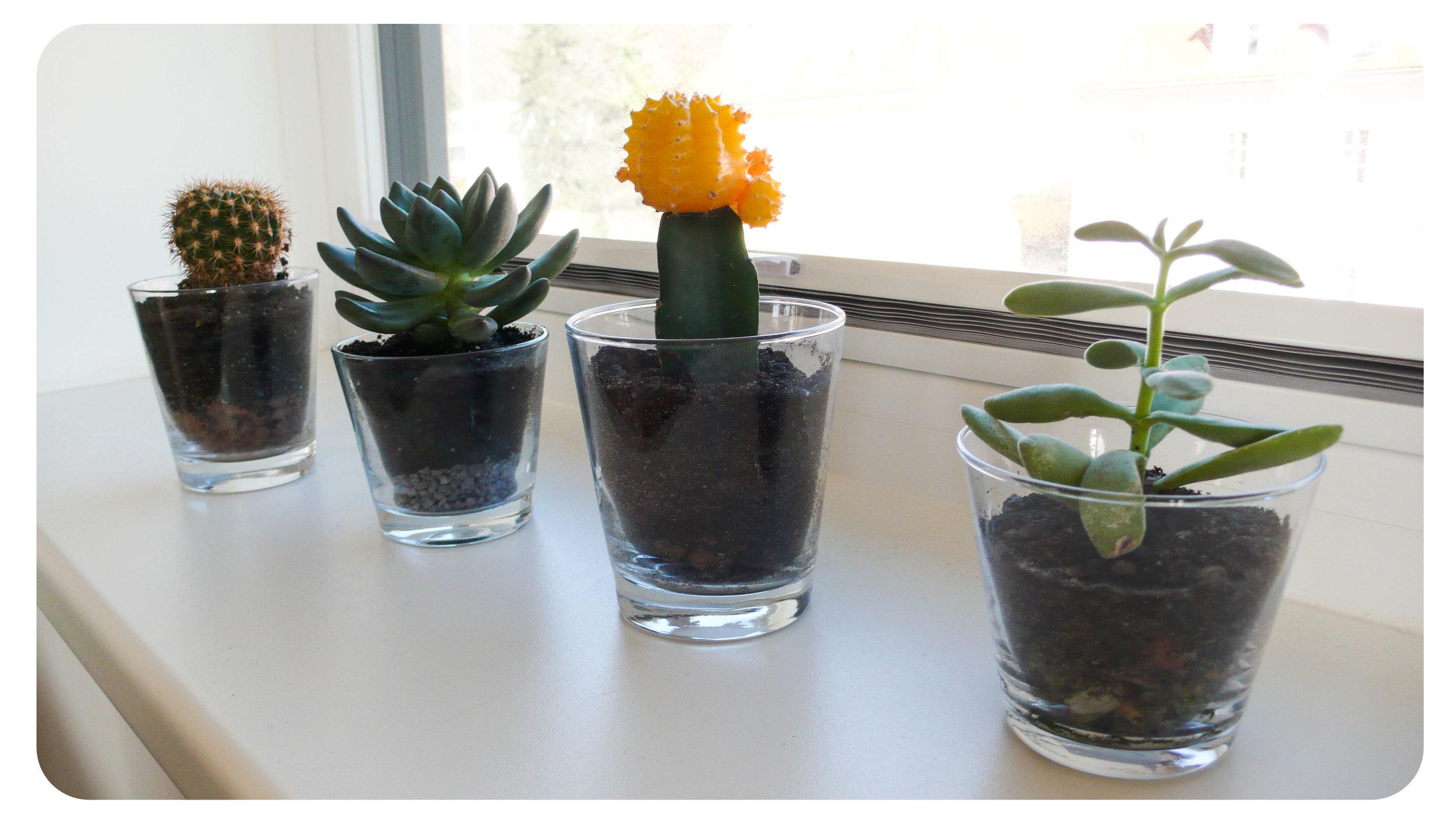 cactei_succulents.jpg