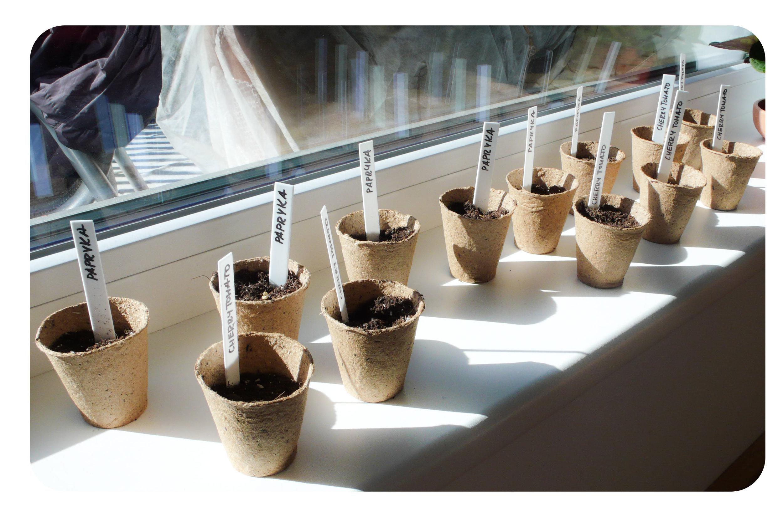 planting7.jpg