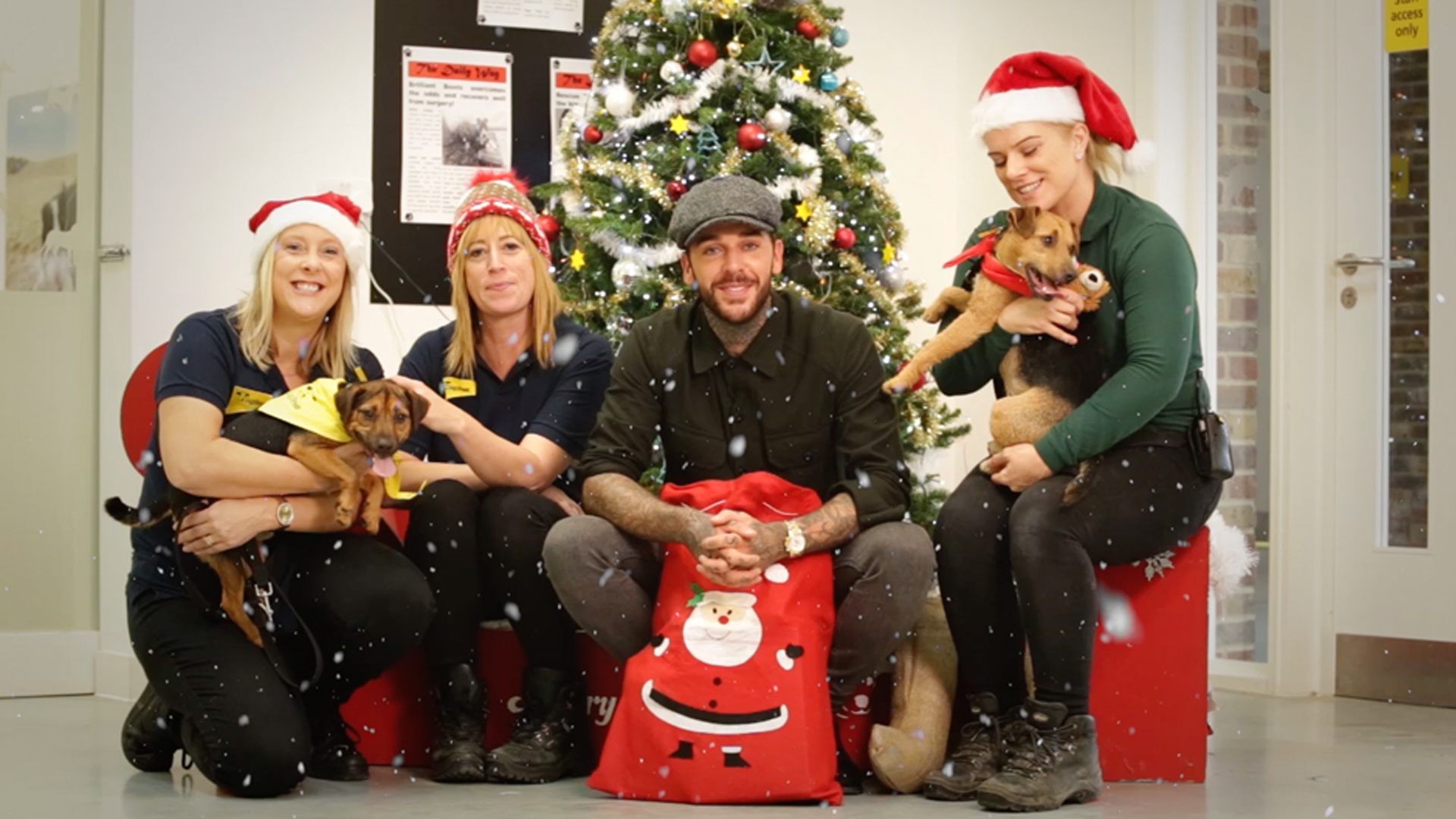 Dogs Trust Christmas Campaign - Click Image for Info