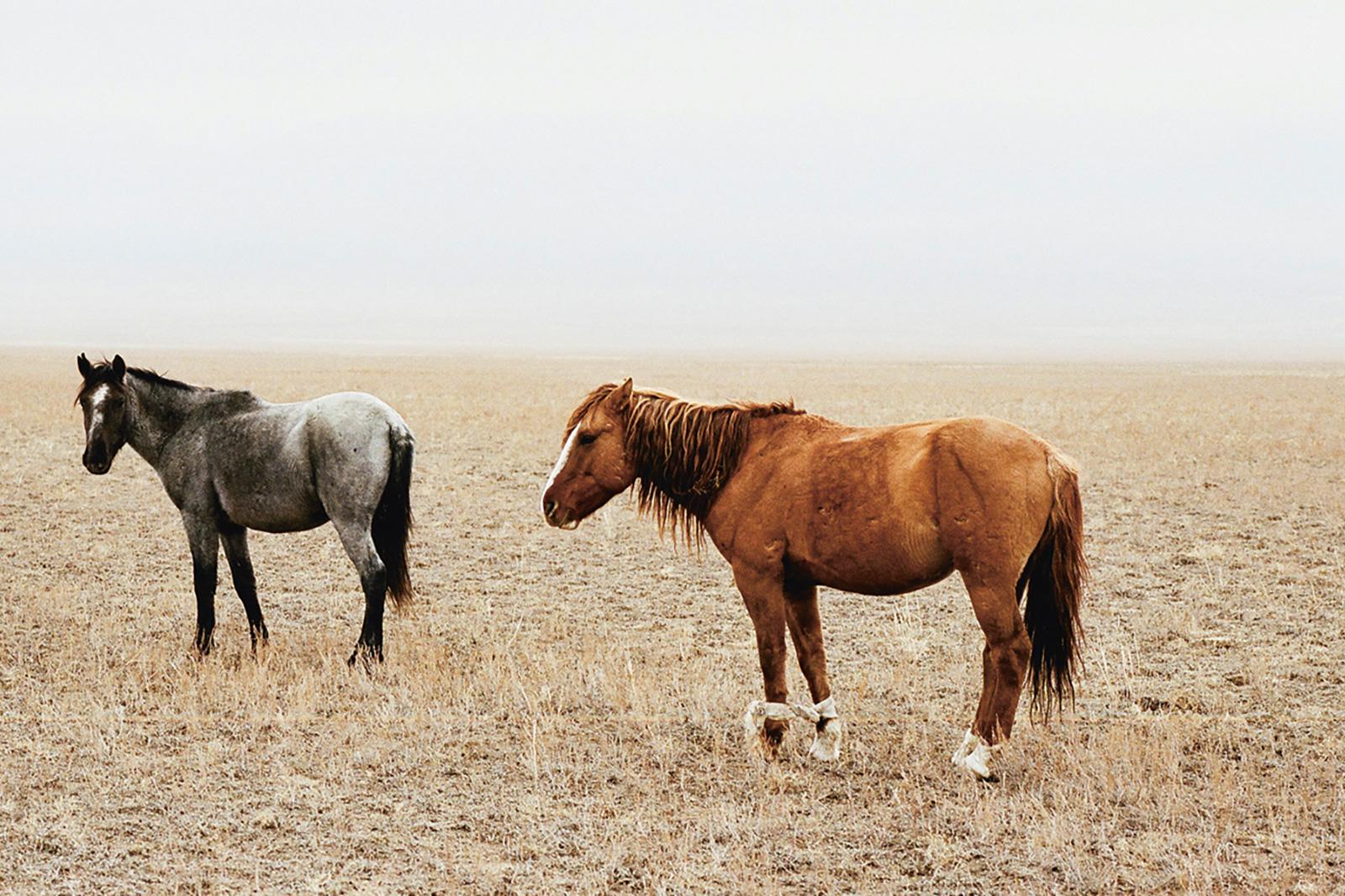 wlm_kazakhstan_00.jpg