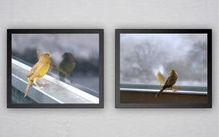David Claerbout, Breathing Bird, 2012