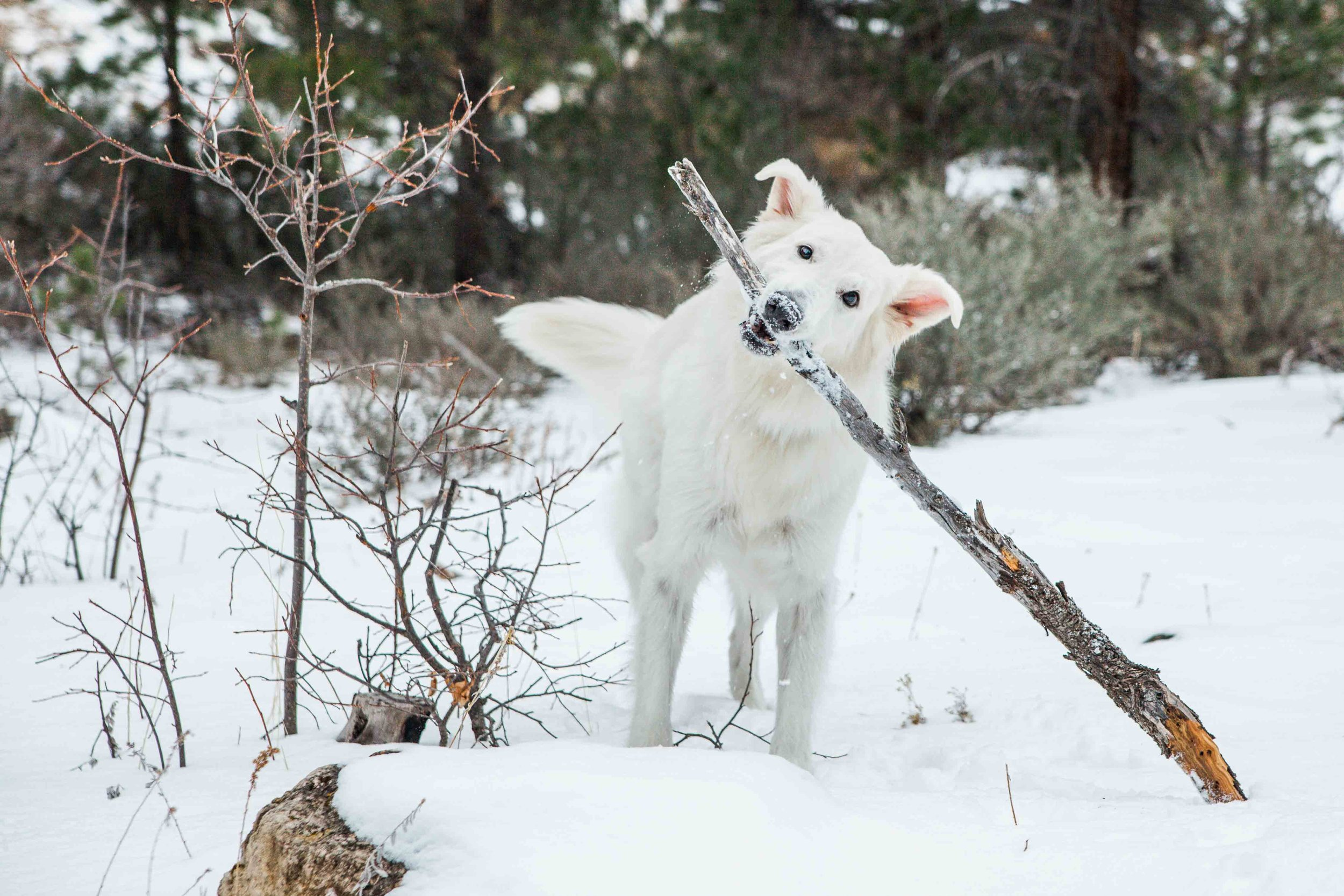 Dog Photographer - Sheridan Wyoming - Kerns Photography