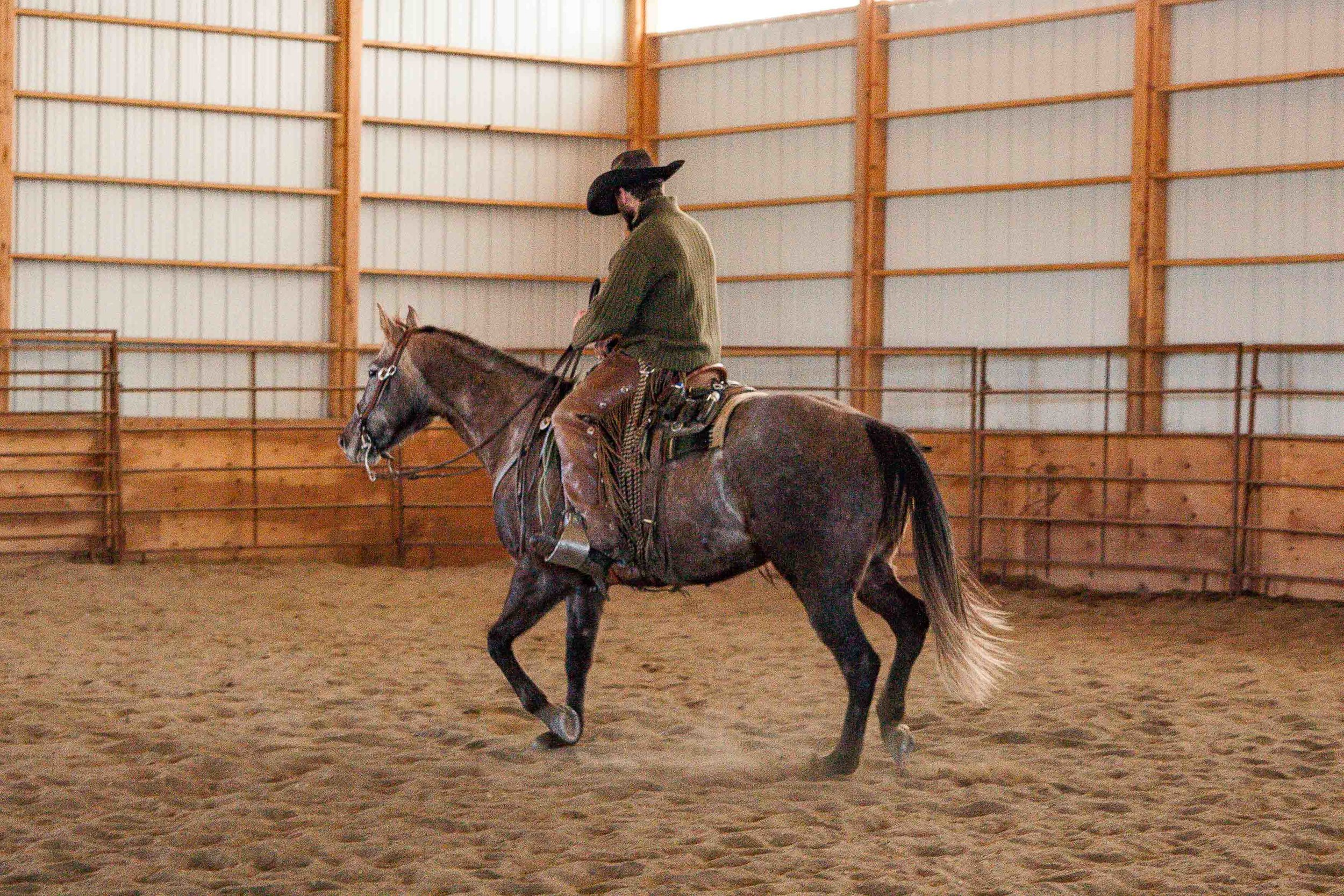 Real Ranch Horses, Rawhide Quarter Horses in Billings Montana