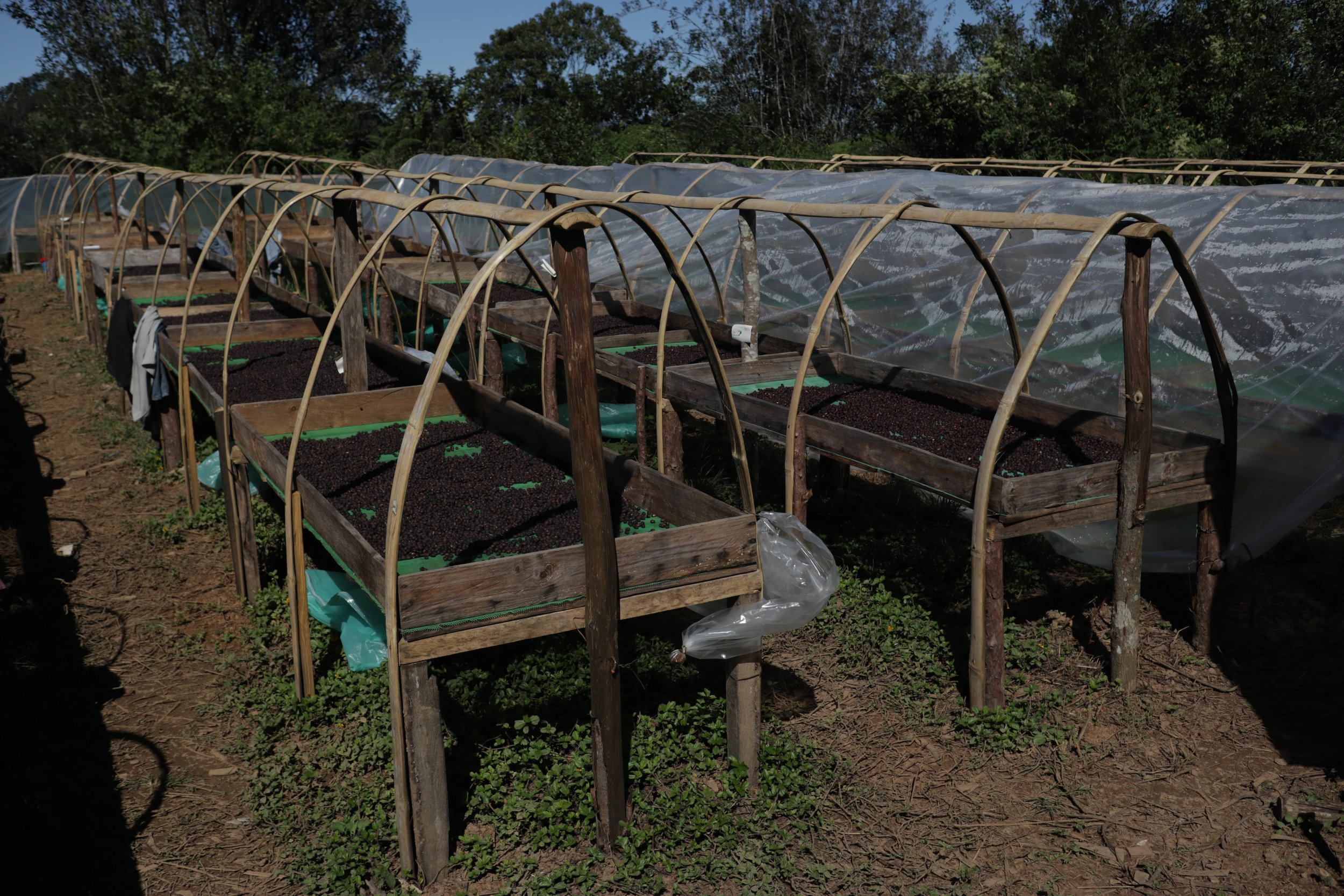 Raised drying beds