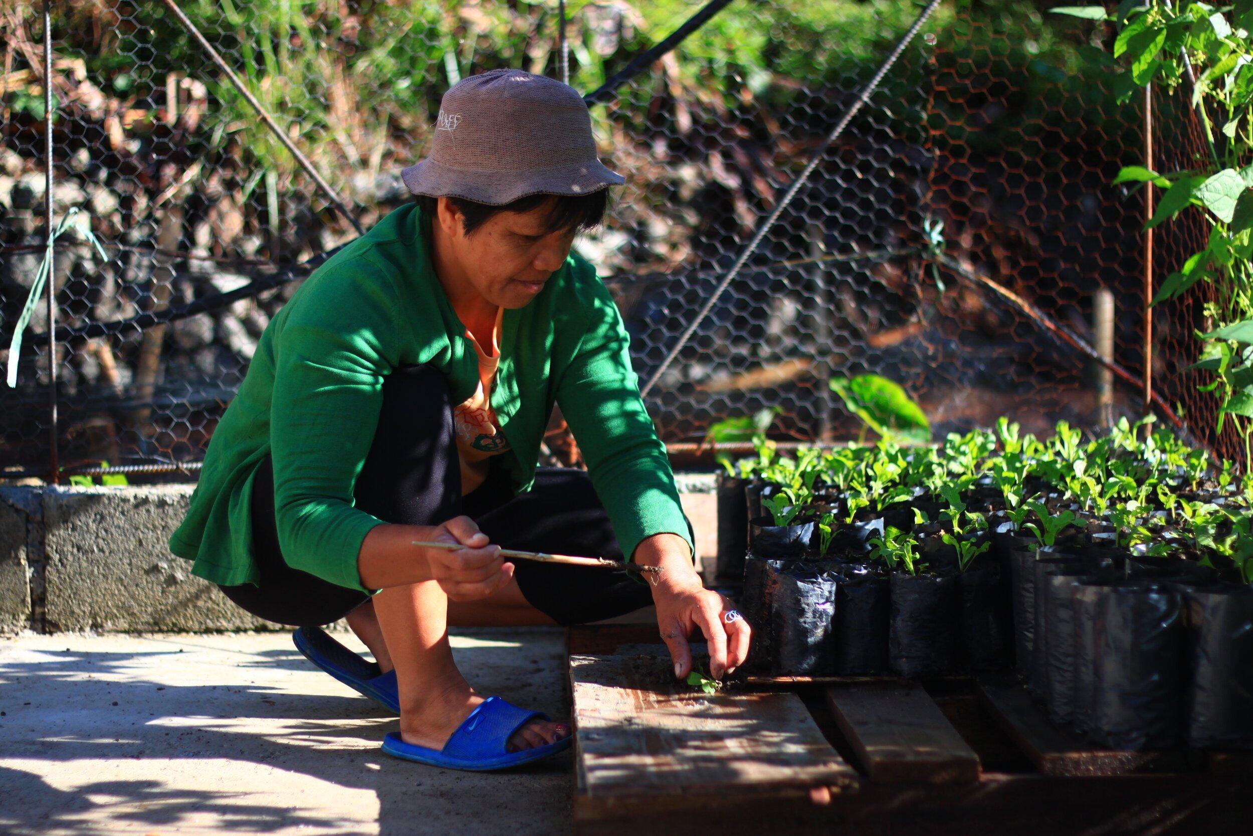 Auntie Asthrine tending the coffee seedlings