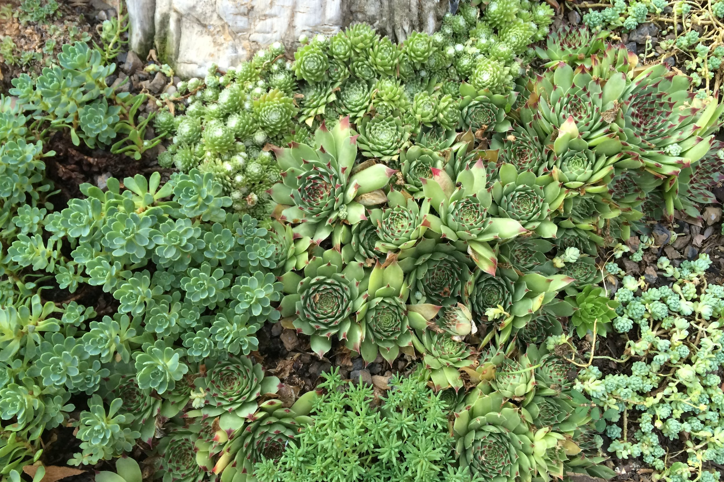 Gardens and Yards  These are variety of gardens and yards designed around New York City, employing varieties of sedum and other hearty, low-maintenance plants, indigenous stone, steel, and other complimentary materials.