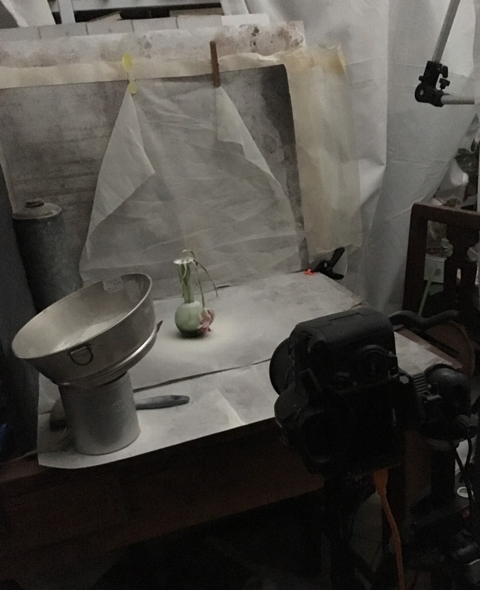 The setup for the Miss Haversham's Tulip photo you can see below. My phone 'saw' much more light than there was in reality, I often shoot in a twilight with low ISO because I love how the light is drawn to the objects I photograph even if I can't see it myself.