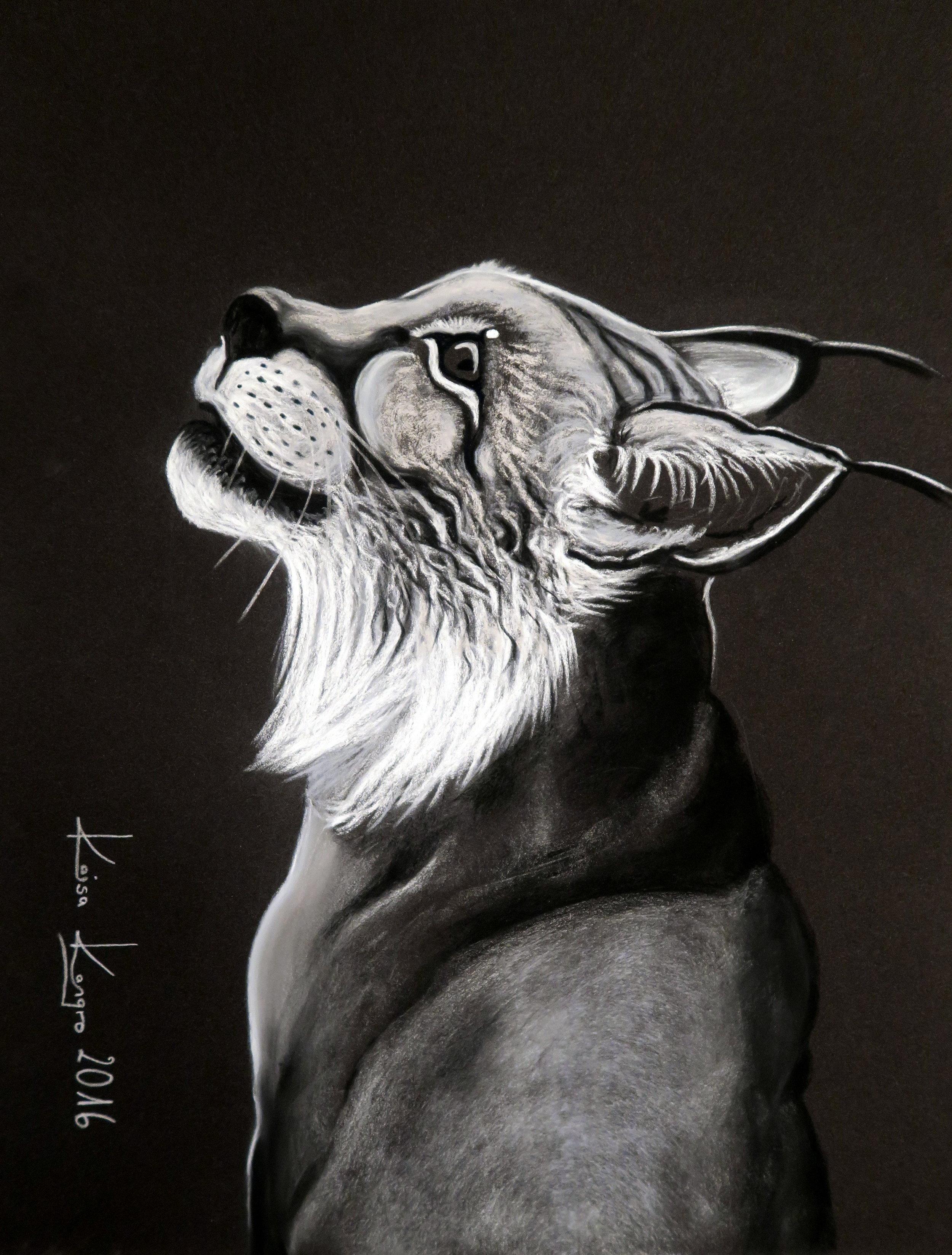 Lynx pastel drawing 2016