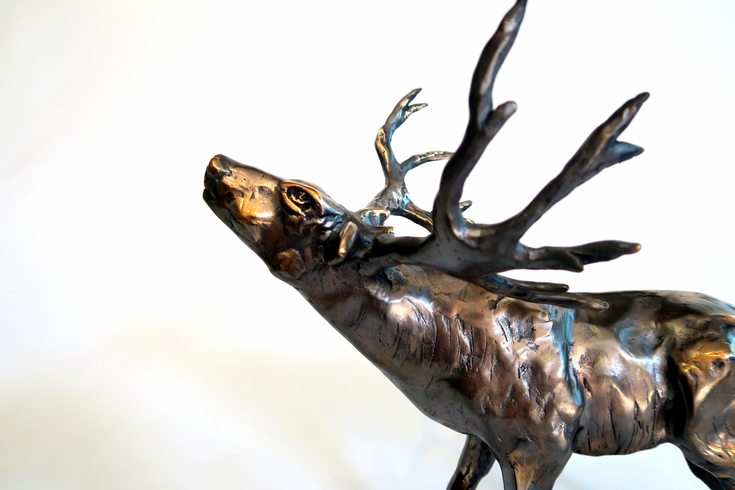 Colorado Mule Deer Looking for Inspiration 2016
