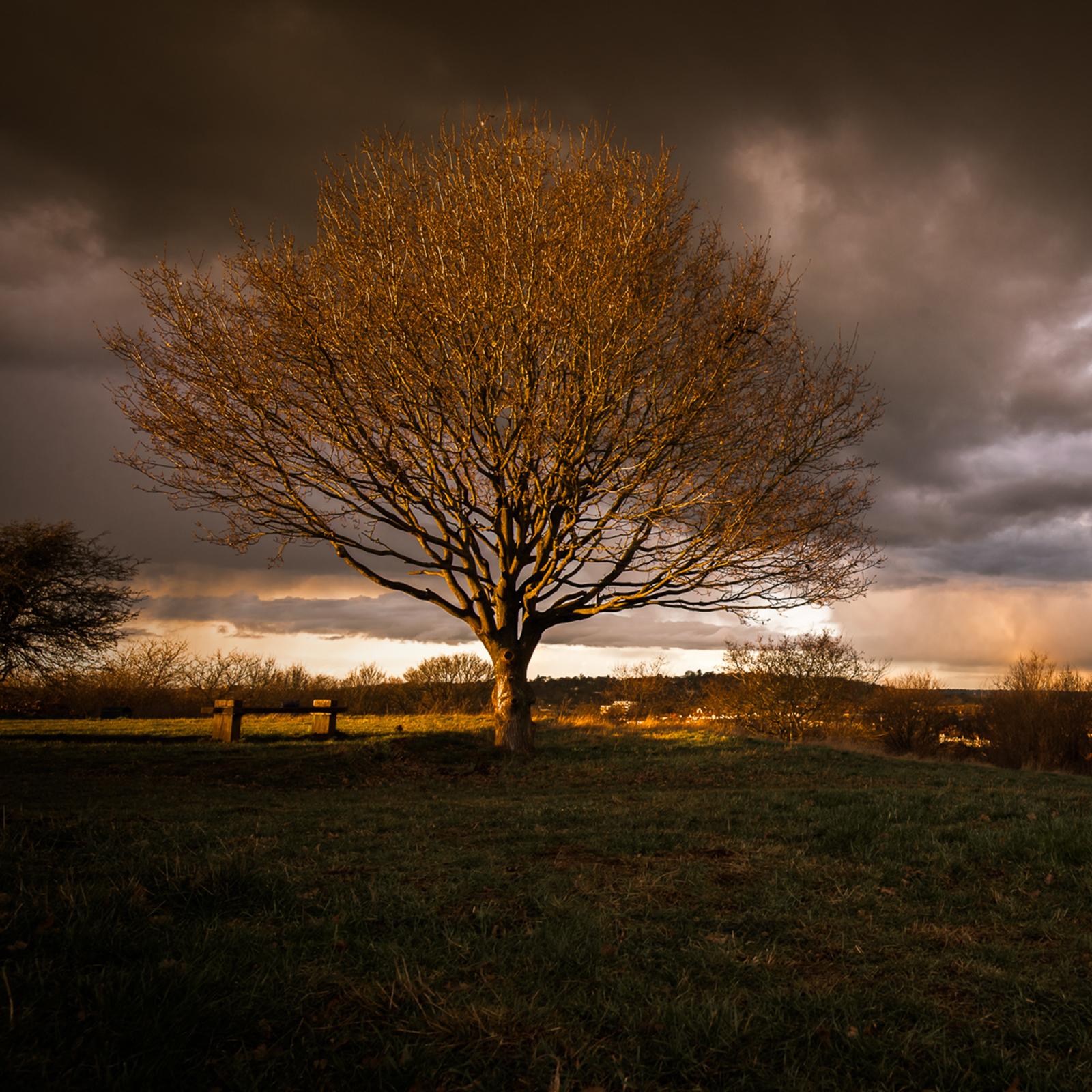 Tree in Horsendon Hill
