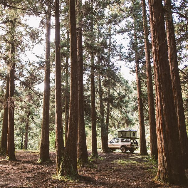 Finding solitude amongst some old friends. #kauaioverlander #smallislandbigadventures
