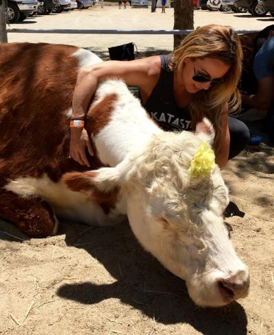 Aretha, the hugging cow saint.