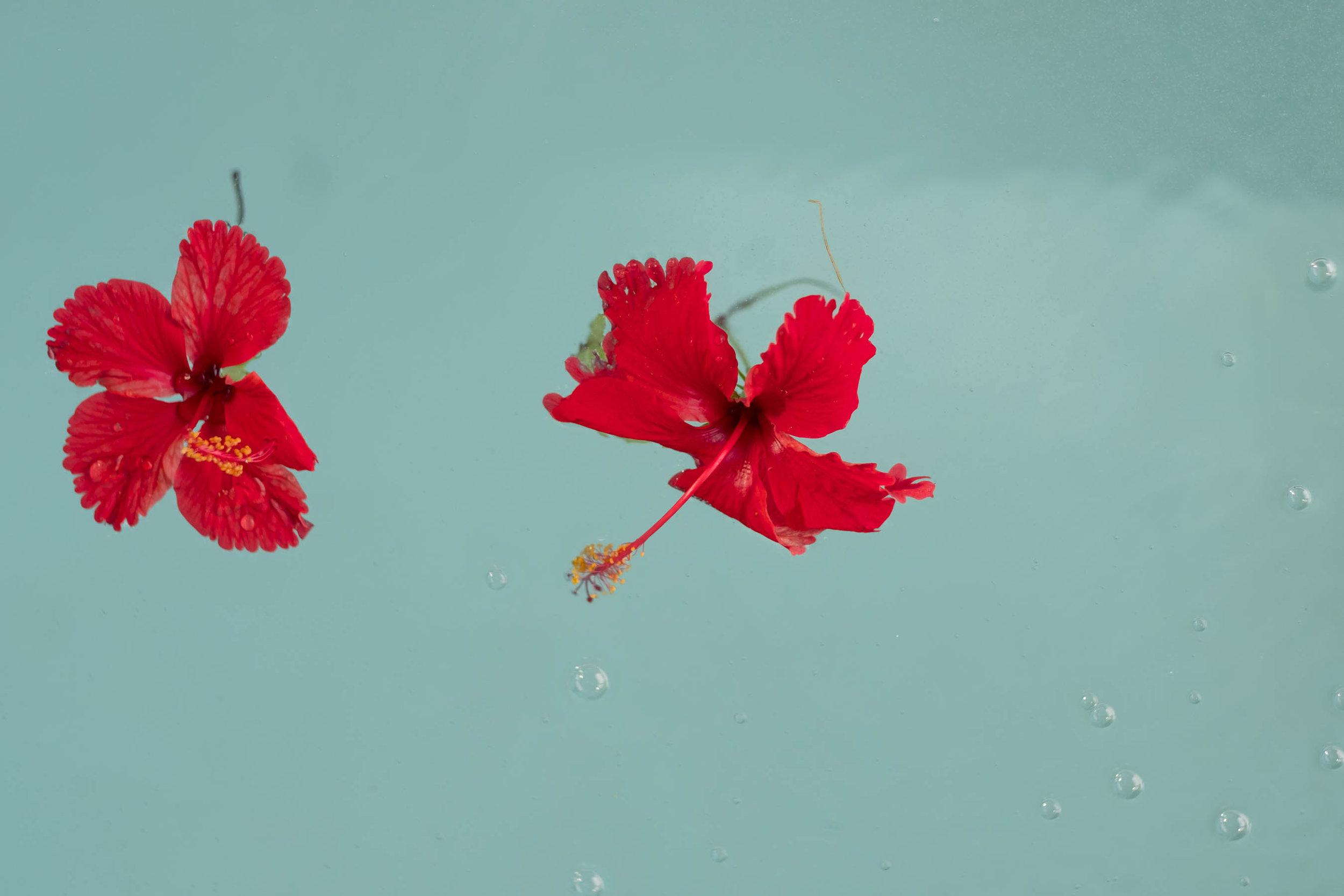 tortuga bay water flowers 1