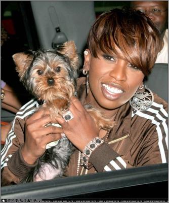 Here's Missy Elliott with a Yorkie!