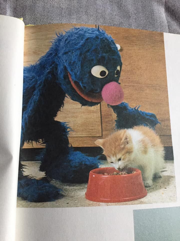 The kitty is eating from a cute little red bowl! And Grover is petting him! Is that also not the cutest thing ever!?!