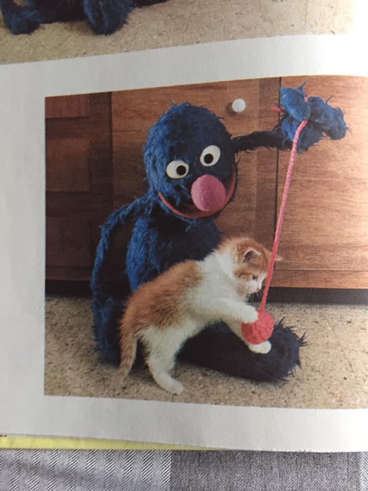 Now cute, lovable, furry Grover is playing with a ball of red yarn! Is this not literally adorability personified?