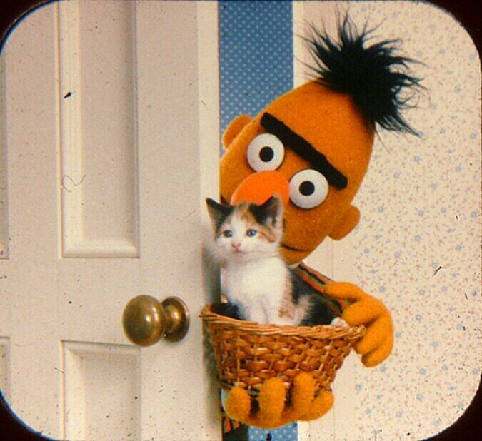 The cutest Bert has ever been in the history of  Sesame Street