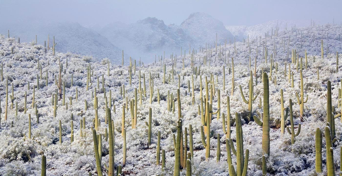 DreamCatchRepeat travels to Tucson, AZ