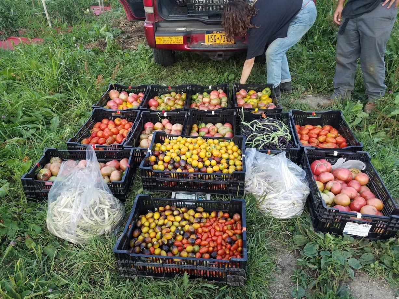 Big Harvest.jpg