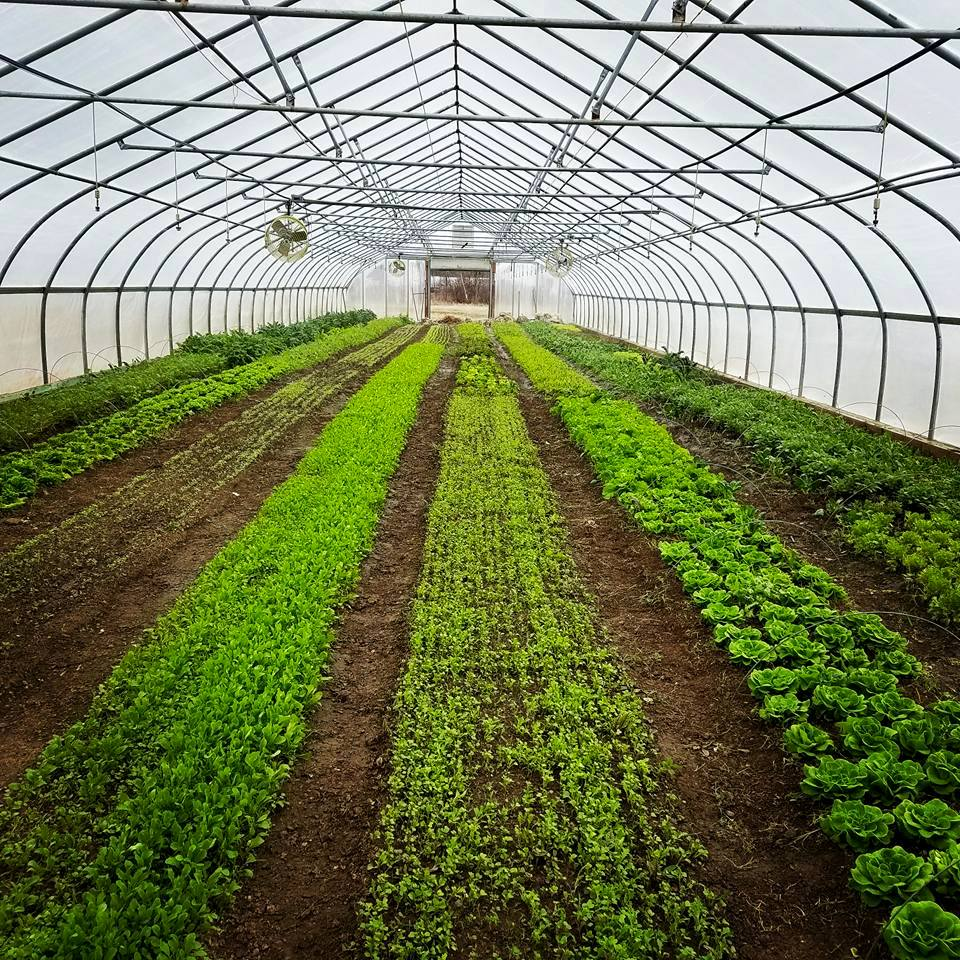 Greenhouse Greens.jpg